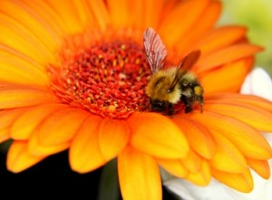 is arizona bee pollen your best choice